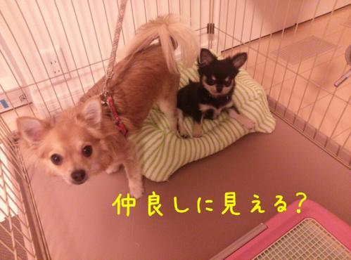 rakugaki_20130828_0011.jpg