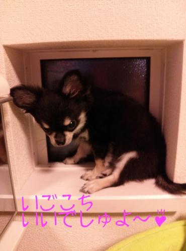 rakugaki_20130905_0005.jpg