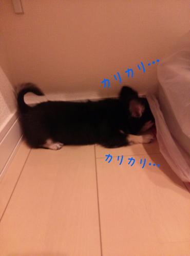 rakugaki_20130905_0008.jpg