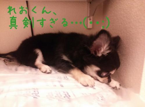 rakugaki_20130905_0010.jpg