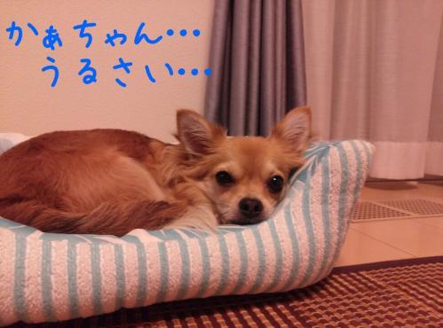 rakugaki_20130915_0001.jpg