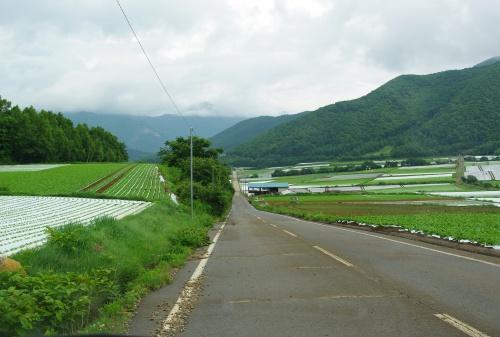 120715レタス畑