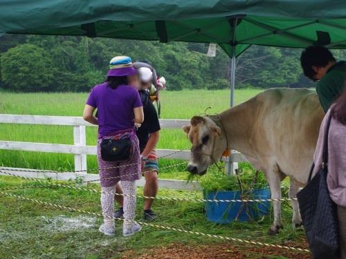 120715ジャージー牛