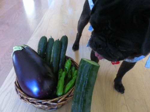 120819お野菜