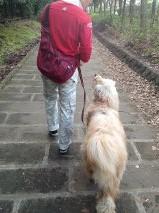 父ちゃん散歩1