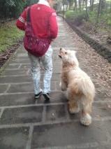 父ちゃん散歩3