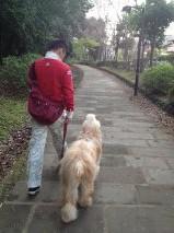 父ちゃん散歩5