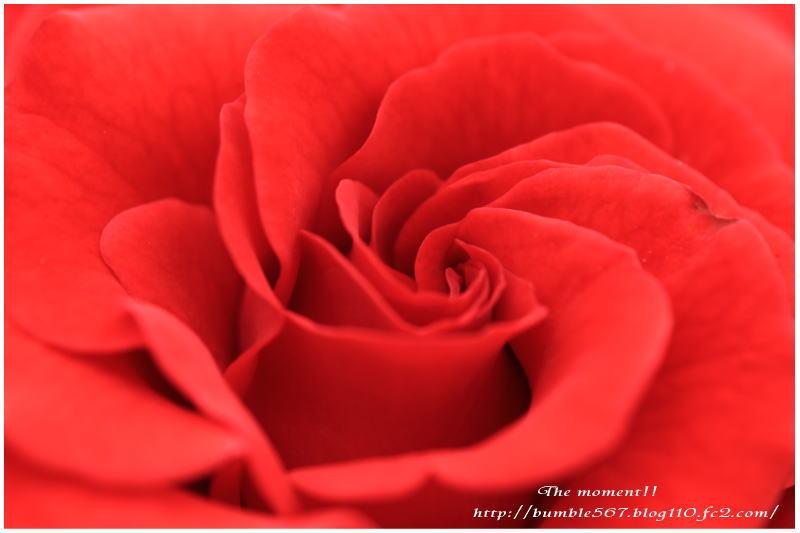 red!!.jpg
