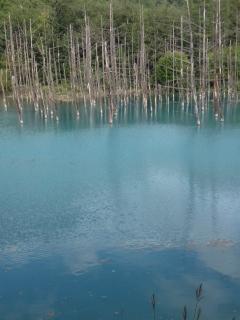 美瑛青い池1