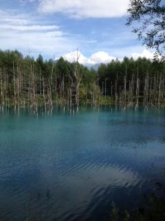 美瑛青い池2
