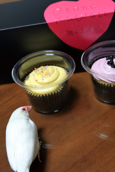 misudo no NY cupcake (3)