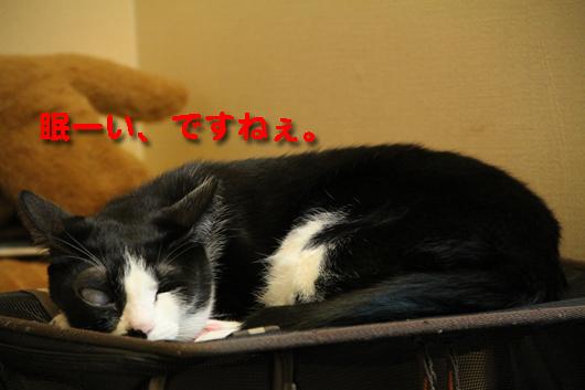 IMG_0637_R眠ーい、ですねぇ。