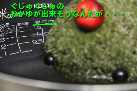 IMG_0014_Rぐじゅぐじゅのおかゆ