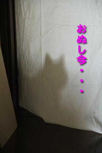 IMG_0556_Rおぬし今・・・