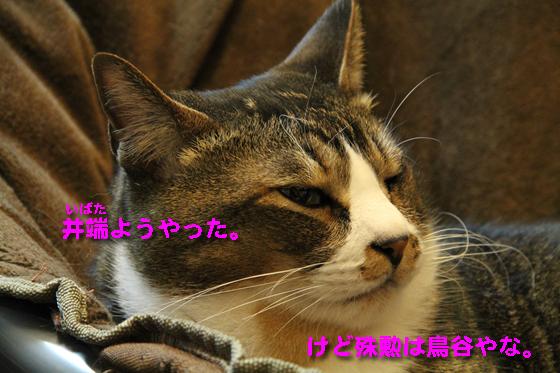 IMG_0109_R井端鳥谷ようやった。