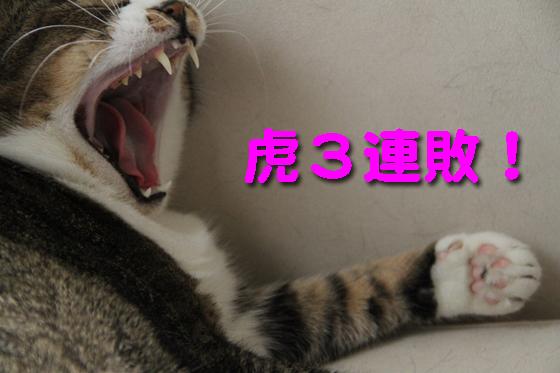 IMG_0140_R虎3連敗。