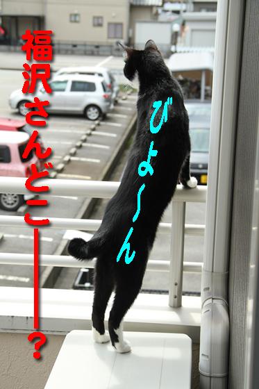 IMG_0698_R福沢さんどこー?