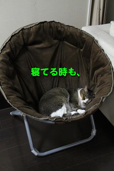 IMG_0452_R寝てる時も、