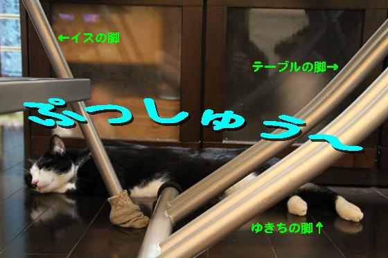 IMG_0525_Rぷっしゅう~。脚だらけ
