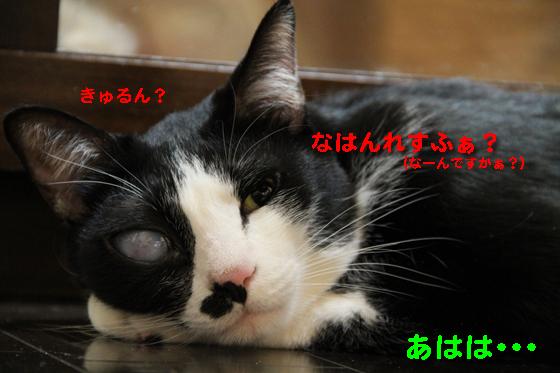 IMG_0526_Rなはんれすふぁ?