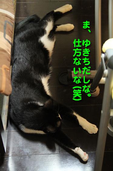 IMG_0534_Rゆきちだし仕方ない(笑)