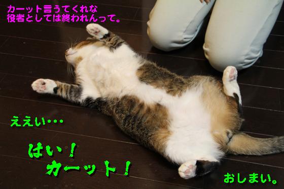 IMG_0558_Rええい、はい!カーット!