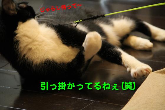 IMG_0199_R引っ掛かってるねぇ(笑)