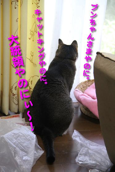 IMG_0811_Rブンちゃんさま、キング、大統領