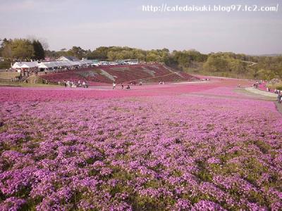 芝桜公園@栃木県市貝町