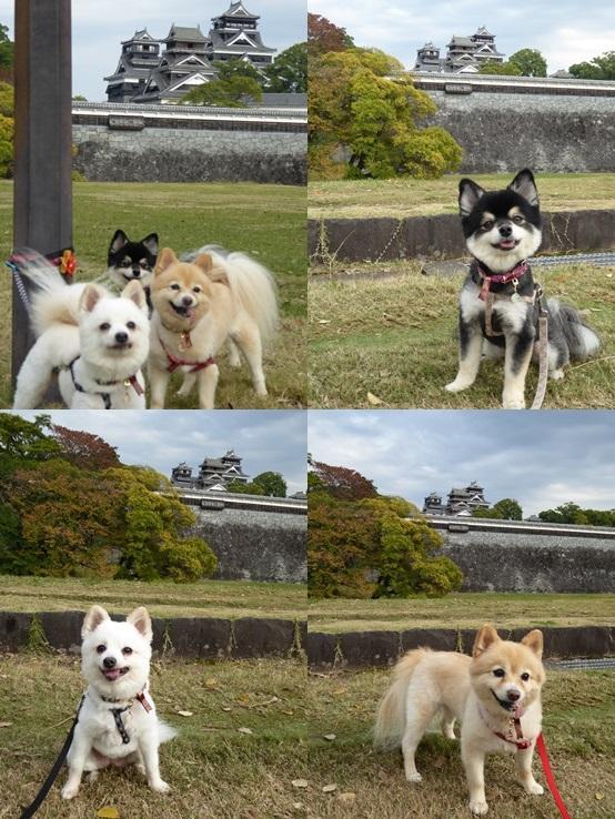 kumamoto141110_2-tile.jpg