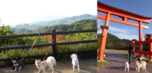 miyajima141110-horz.jpg
