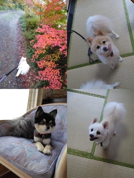 mizuwake141112_2-tile.jpg
