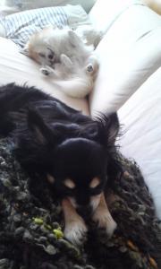 レイラとマール 寝顔