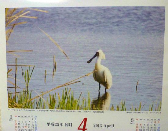 2013.04.23クロツラヘラサギ4