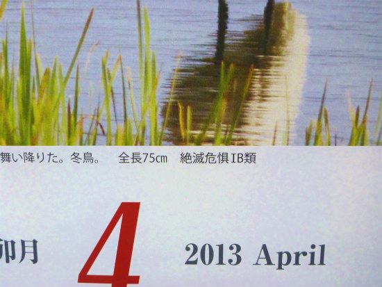 2013.04.23クロツラヘラサギ5