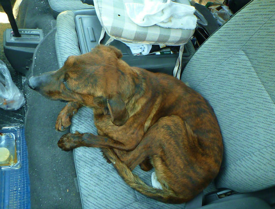 2013.05.04捨て犬2
