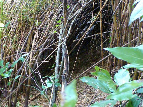2013.10.28島の有害鳥獣捕獲6