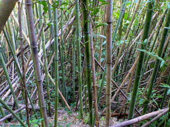 2013.10.28島の有害鳥獣捕獲4