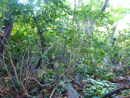 2013.10.28島の有害鳥獣捕獲2