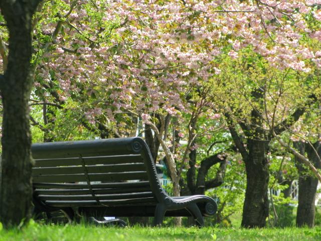 春色ベンチ