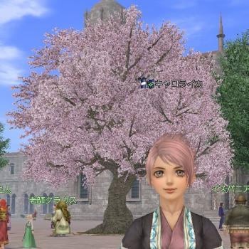 桜の木とイカ