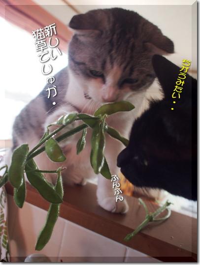 これ猫草?