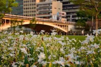 nankanoshima_018.jpg