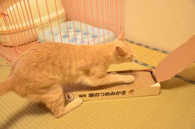 nankanoshima_032.jpg