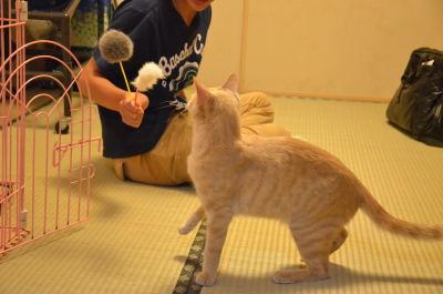 nankanoshima_036.jpg