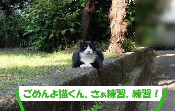 ごめんよ猫くん、さぁ練習、練習!