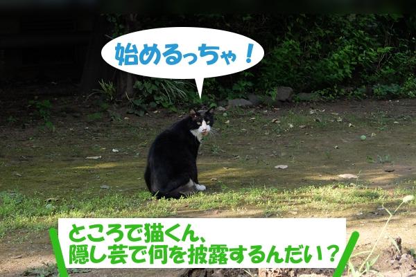 始めるっちゃ! ところで猫くん、隠し芸で何を披露するんだい?