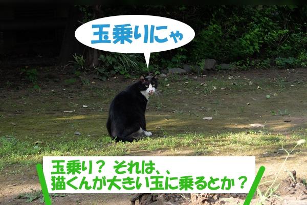 玉乗りにゃ 玉乗り?、もしかして大きい玉に猫くんが乗るのかい?