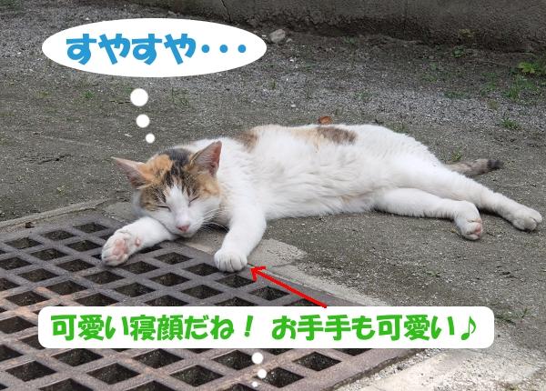 すやすや・・・ 猫くん、可愛い寝顔だね!お手手も可愛い♪