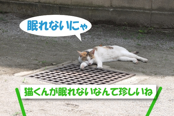 眠れないにゃ 猫くんが眠れないって珍しいね
